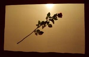beyond-the-rosebush-4